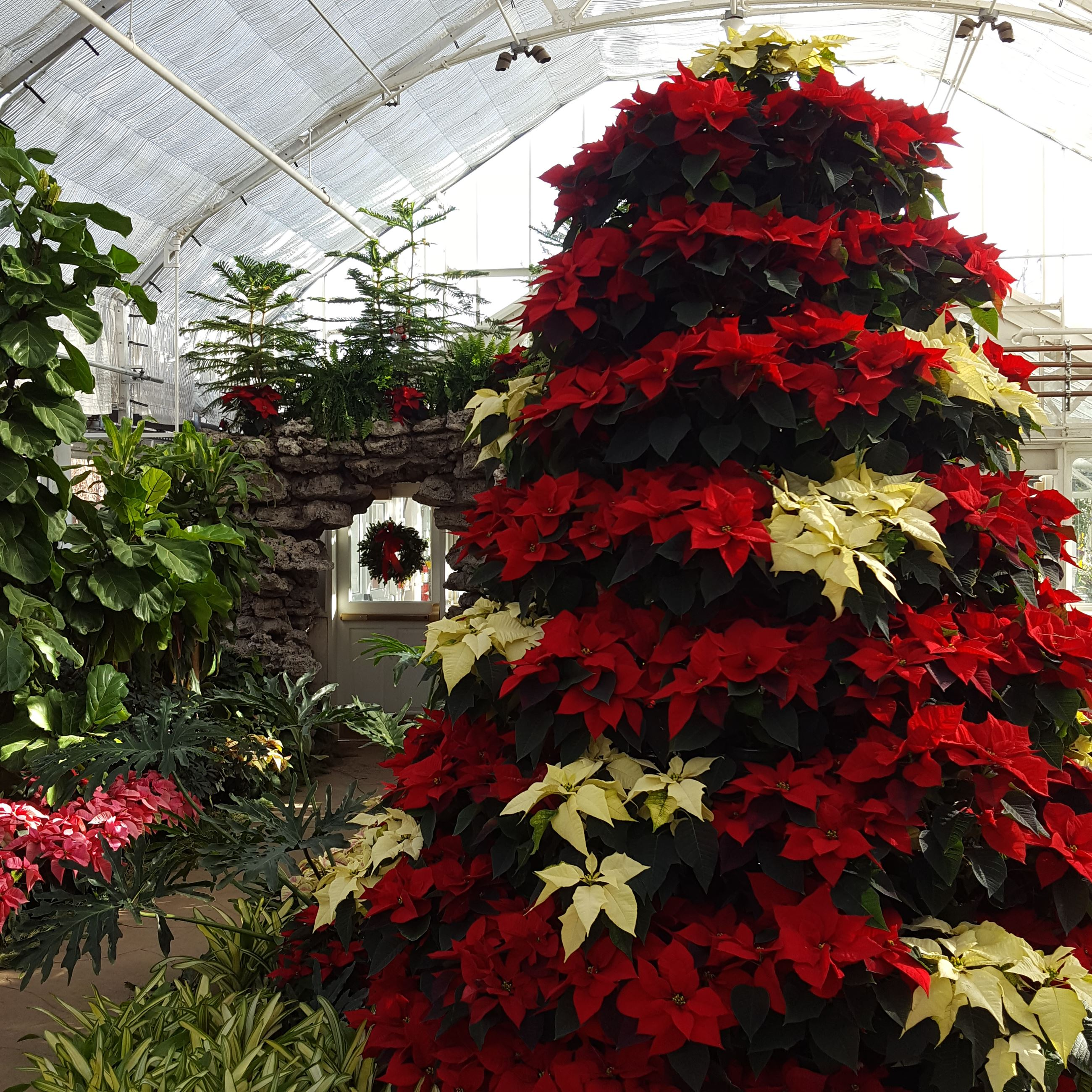 Wilder_Park_Conservatory_Holiday_Show